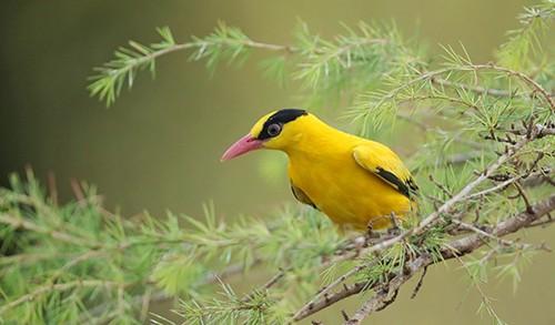 佳能长焦镜头打造全方位观鸟体验