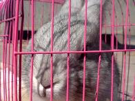标题:兔子<br/> 型号:华冠3812<br/>作者:397143071