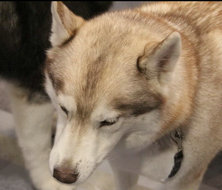 ISPO现场的可爱狗狗