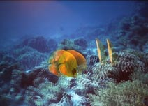 海洋珊瑚探奇3D