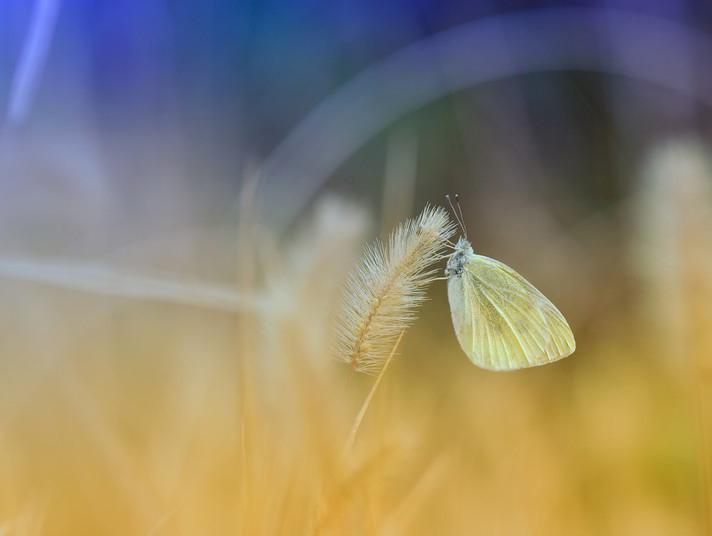 2012微距摄影作品