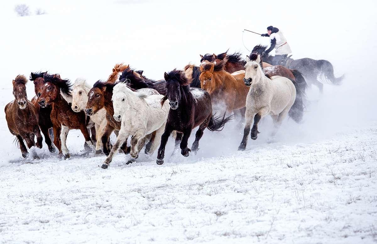 # 抓拍 # 雪域奔马