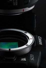 佳能新RF镜头实拍体验