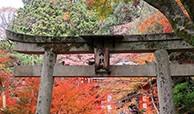 佳能G9X II秋季京都拍摄之旅1