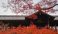 佳能G9X II秋季京都拍摄之旅2