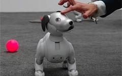 索尼aibo机器狗