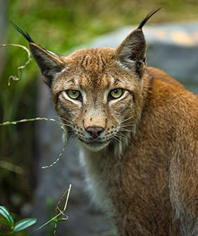 佳能EOS R挑战拍摄野生动物