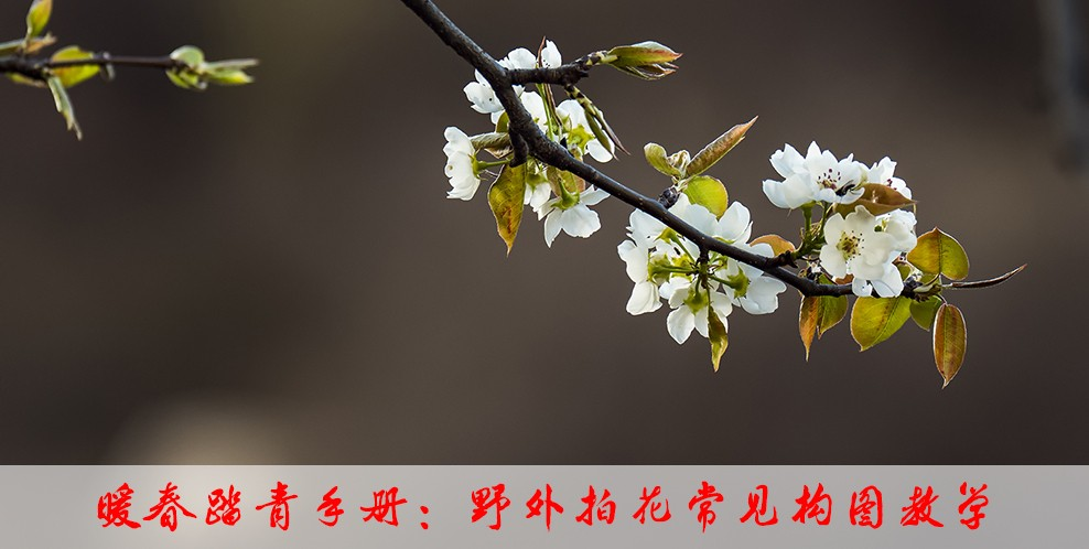 暖春踏青手册:野外拍花常见构图教学